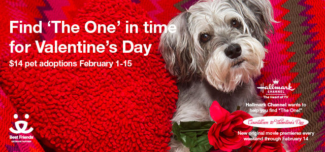FEB Dog image - Email Banner 640x300