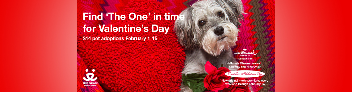 Find 'The One' in time for Valentine's Day