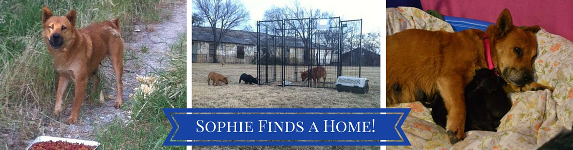 Sophie Finds a Home
